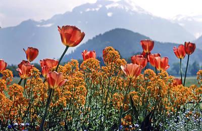 The Tulips In Bloom Print by KG Thienemann