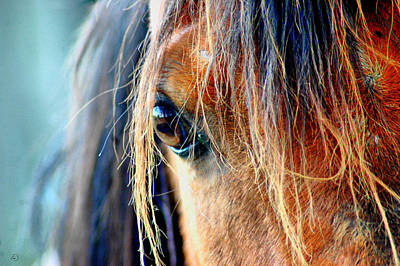 Horse Photograph - The View by Emily Stauring