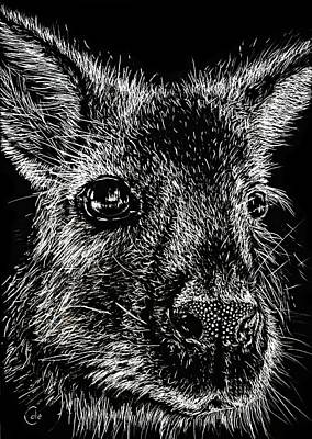 Kangaroo Drawing - The Wallaby by Nathan Cole