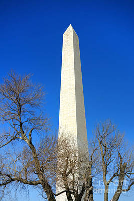 The Washington Monument And The Big Old Tree On The National Mall Print by Olivier Le Queinec