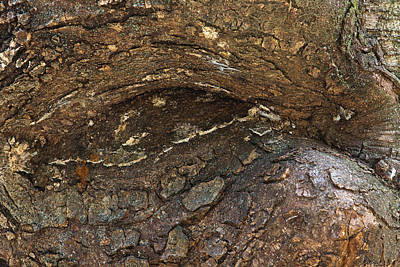 Burl Photograph - The Watching Burl by Dale Kincaid