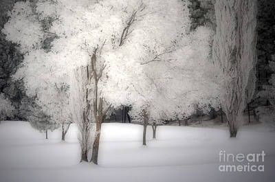 The White Dreams Of Winter Print by Tara Turner