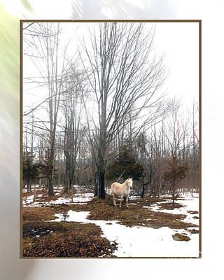 The White Stallion On A Snowless  Mound Print by Patricia Keller