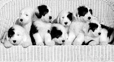 Warm Fuzzy Puppy Photograph - The Whole Gang by Kathleen Struckle