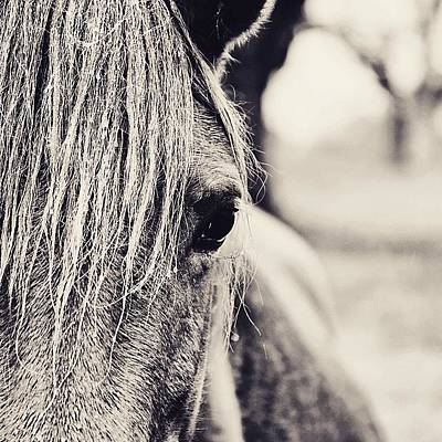 Horse Photograph - The Wild One #horse #rain #animal by Scott Pellegrin