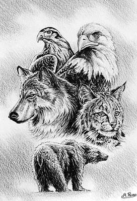 Wolves Drawing - The Wildlife Collection 1 by Andrew Read