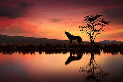 Wolves Digital Art - The Wolf At Sunset by Jennifer Woodward