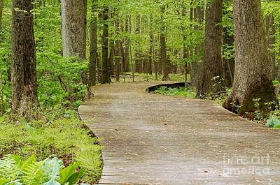The Wooden Path Print by Patrick Shupert