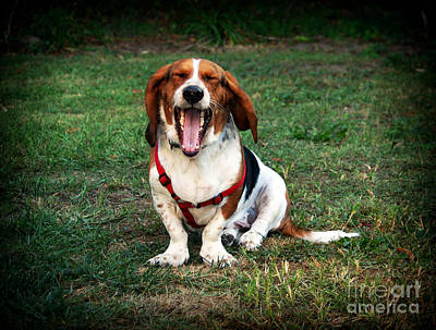 Dog Pics Photograph - The Yawn by John Rizzuto
