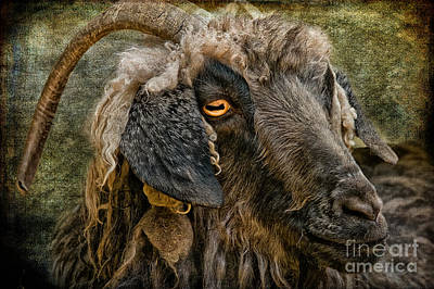 Goat Digital Art - The Year Of The Goat by Lois Bryan