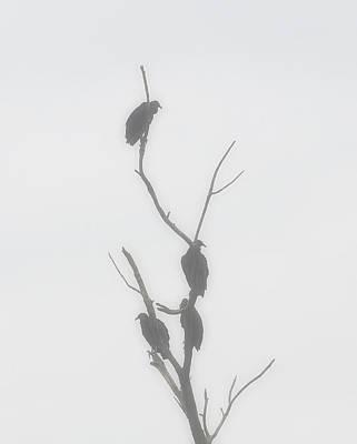 Their Waiting Four Black Vultures In Dead Tree Print by Chris Flees