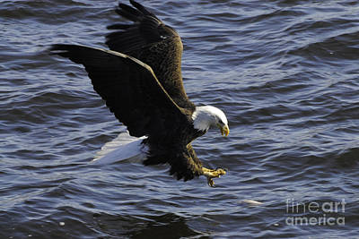Eagle Photograph - There Is Dinner by Robert Smice