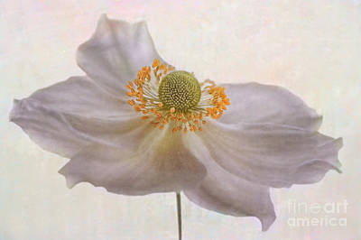 Macro Digital Art - Thimbleweed by John Edwards