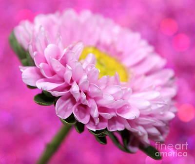 Gerbera Daisy Photograph - Think In Pink by Krissy Katsimbras
