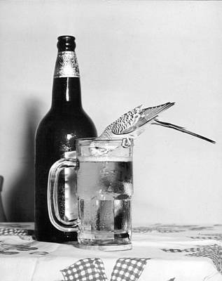 Cockatiel Photograph - Thirsty Bird by Retro Images Archive