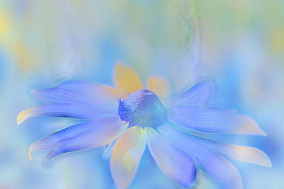 Black Eyed Susan Photograph - This Is Not Just Another Flower - S05a by Variance Collections