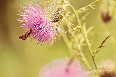 Thistle And Friend Print by Lois Bryan