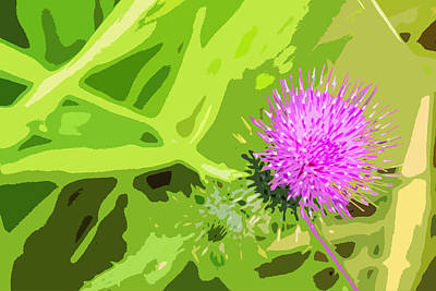 Abstract Digital Photograph - Thistle by Nancy Merkle