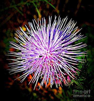 Spain Photograph - Thistle Or Sea Creature by Clare Bevan