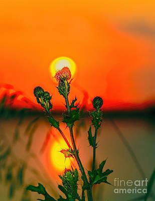 Flower Photograph - Thistle by Viktor Birkus