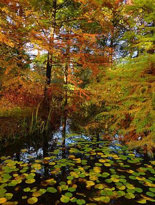 Autumn Foliage Photograph - Thoreau's Pride by Connie Handscomb