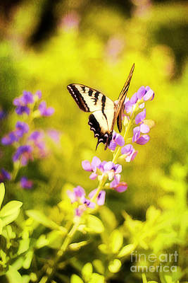 Fluttering Photograph - Those Summer Dreams by Darren Fisher