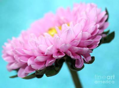 Gerbera Daisy Photograph - Thoughts Of You by Krissy Katsimbras