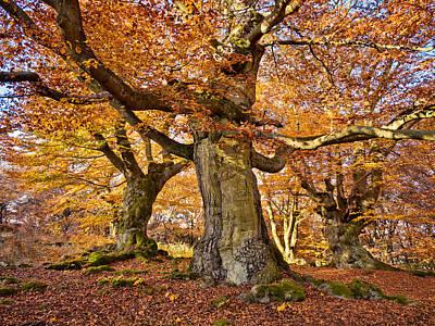Three Ancient Beech Trees - Germany Print by Martin Liebermann