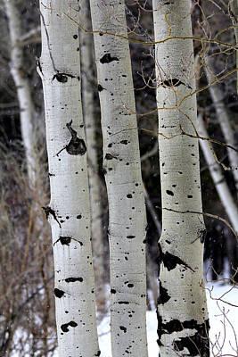 Three Aspen In Winter Original by Sam Sherman