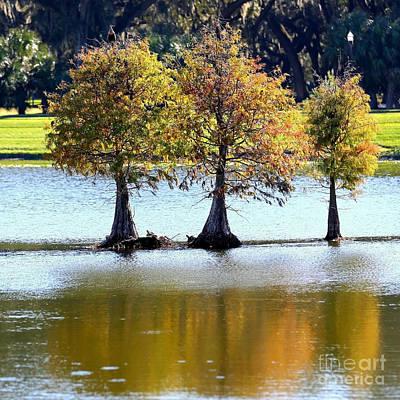 Pond Turtle Photograph - Three Autumn Cypress Trees by Carol Groenen