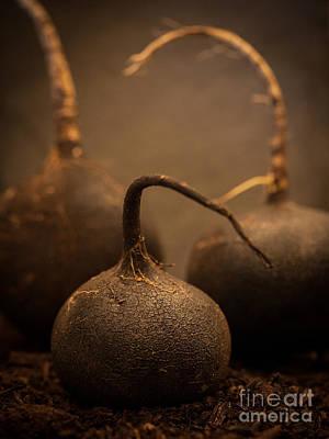 Vegetables Photograph - Three Black Radish Portrait by Patricia Bainter