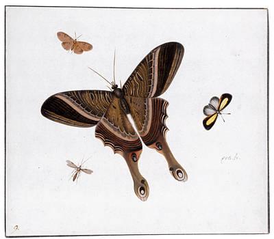 Herman Henstenburgh Painting - Three Butterflies And A Gnat by Herman Henstenburgh