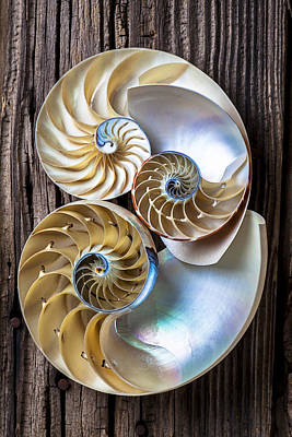 Spiral Photograph - Three Chambered Nautilus by Garry Gay