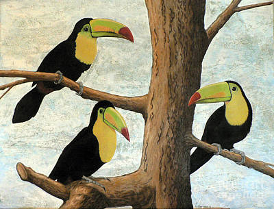 Toucan Drawing - Three In A Tree by Paulette Morrissey