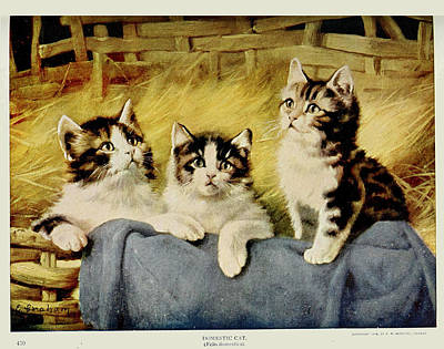 Cats Painting - Three Kittens by E Graham