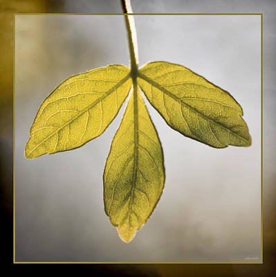 Green And Brown Photograph - Three Leaves by Jaki Miller