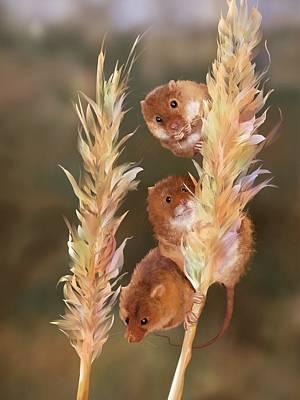 Three Little Mice Original by Kristina Becker
