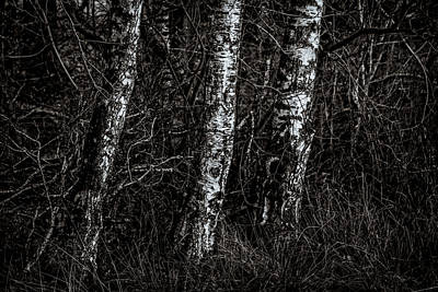 Trio Photograph - Three Of A Kind by Odd Jeppesen