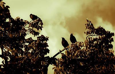 Photograph - Three Peeps by Edward Kay