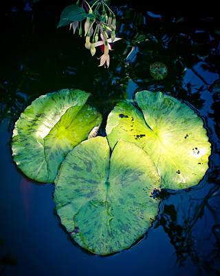 Waterlily Photograph - Three by Priya Ghose