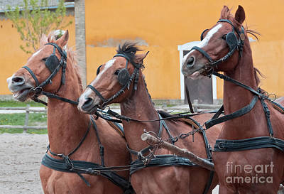 Three Running Horses Print by Beth Wolff