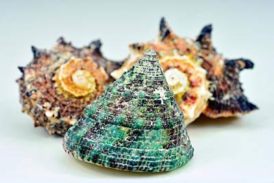 Three Shells Original by Toppart Sweden