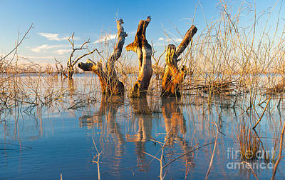 Submerge Photograph - Three Sisters by Bill  Robinson