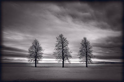 Three Trees Photograph - Three Trees by Steve Gadomski