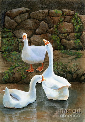 Ink Drawing Mixed Media - Three White Ducks by Sharon Freeman