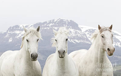Three White Horses Run In The Mountains Print by Carol Walker