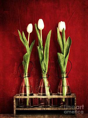 Three White Tulips Floral Print by Edward Fielding