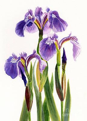 Three Wild Irises On White Print by Sharon Freeman