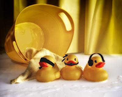 Parable Photograph - Three Wise Duckies by Mark Fuller