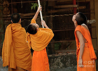 Three Young Monks Laos Print by Bob Christopher